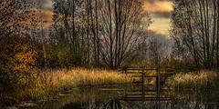 Morning Footbridge II (aj_nicolson) Tags: appicoftheweek dawn sunrise pond water outdoors lake clouds footbridge bridge morninglight morning autumn green orange landscape