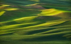 Morning Light on the Palouse (Jim Patterson Photography) Tags: morning light green lines rural sunrise countryside washington spring shadows curves americana verdant pastoral eastern rollinghills palouse steptoebutte jimpattersonphotography jimpattersonphotographycom seatosummitworkshops seatosummitworkshopscom