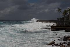 Palms on the coast (drzoidbergh) Tags: sea usa hawaii coast meer waves küste wellen pāhoa