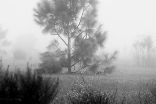 Just there in the fog