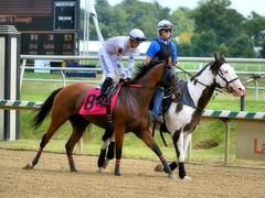 "2015-08-23 (53) r2 Sheldon Russell on #8 Wundahowigothere (JLeeFleenor) Tags: photos photography md marylandhorseracing laurelpark jockey جُوكِي ""赛马骑师"" jinete ""競馬騎手"" dżokej jocheu คนขี่ม้าแข่ง jóquei žokej kilparatsastaja rennreiter fantino ""경마 기수"" жокей jokey người horses thoroughbreds equine equestrian cheval cavalo cavallo cavall caballo pferd paard perd hevonen hest hestur cal kon konj beygir capall ceffyl cuddy yarraman faras alogo soos kuda uma pfeerd koin حصان кон 马 häst άλογο סוס घोड़ा 馬 koń лошадь outside maryland"