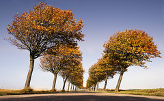 Autumn Road (parkerbernd) Tags: road autumn trees red leaves germany lumix perspective panasonic explore fehmarn orth gx1 sulsdorf