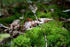 Moospolster (sduesterhus) Tags: sunlight nature grass moss nikon branch outdoor natur gras forestfloor moos waldboden zweig sonnenlicht hohemark d5000