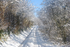 Snowy Track (J_Piks) Tags: snow winter road track trees wales snowdonia