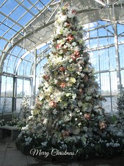 Christmas tree at Conservatory (Pumpkin Hill Studios/King William Miniatures) Tags: christmas virginia christmastree botanicalgardens lewisginterbotanicalgardens