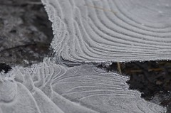 (kawa.uso) Tags: winter macro ice austria nikon eis upperaustria almtal almsee d7000