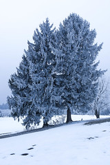 Nadeldach (dretschi) Tags: schnee winter snow bayern samsung andechs kalt baum wandern winterwonderland tannenzapfen unterschlupf pähl nx1000