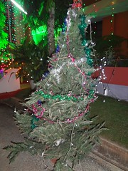 Christmas Tree (Anulal's Photos) Tags: christmas xmas christmastree xmastree xmastrees christmastreedecoration christmastreedecorations christmascelebrations xmastreedecoration xmascelebration christtree xmastreedecorations christmasmaram treeatchristmas