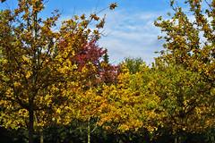 HerbstStillLeben (Michael Döring) Tags: gelsenkirchen buer bergersee herbststillleben goldeneroktober afs85mm18g d800 michaeldöring