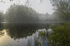 No. 1076 Tolne lake (H-L-Andersen) Tags: tolne lake mist misty morning automn reflections reflektions forest wood trees water calm landoflight denmark landscape nature serene