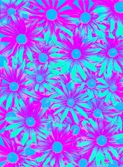 57763.23 Rudbeckia hirta (horticultural art) Tags: horticulturalart rudbeckiahirta rudbeckia flowers pattern psychedelic