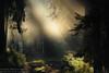 Piska primeval forest. NE Poland (Karl Wild) Tags: forest primeval poland mazury masuria autumn light morning nikon d3 200500vr