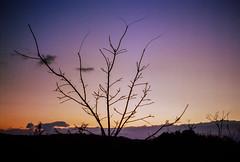 Sunset, Middletown, New York (nsandin88) Tags: vintagecamera retinaiiic middletown color sunset schneiderkreuznach folding retina newyork vintage kodakretina ektar100 kodakektar ektar kodak