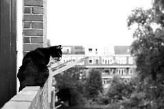 Patrols (Fardo.D - swamped in editing, will catch up soon) Tags: karel kitty balcony bw monochrome animal pet