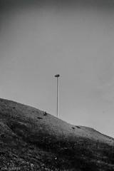 5. (slivinska) Tags: birds lamp sky black blackandwhite bw centrum grass minimalism canon helios dslr dept