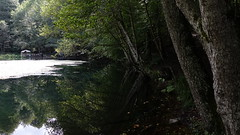 Trees near Lake (hikmetozgozen) Tags: trees lake forest bolu yedigller