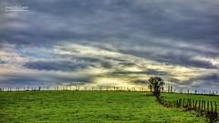 Let's painting landscape. (Jean McLane) Tags: landscape paysage paisaje green darksky cloudy clouds nuages nubes