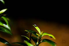 bug life (Naveen Gopalakrishnan) Tags: bug insect macro life micrography nature leaf onits topoftheworld sunlight beauty green nikon nikond3200 d3200 kitlens 1855 nvn