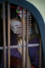 Maiko20161017_03_14 (kyoto flower) Tags: tanan fukuno kyoto maiko 20161017     gaap