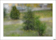 Seguimos con el temporal (V- strom) Tags: lluvia agua verde gotas texturas hierba amarillo nikon nikon2470 naturaleza urbana