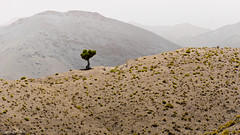 alone (soundmoods) Tags: atlas grandatlas morocco tree alone mountains end hazy distance horizon earth lonely
