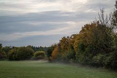 Nebelschwaden (shortscale) Tags: wiese nebel himmel hecke wolke
