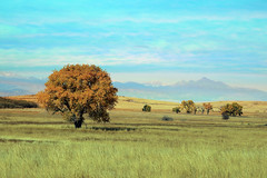 last vestige of fall color (oldogs) Tags: fall tree rockymountains landscape t6s