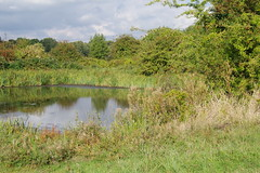 Holding Pool (Lil Shepherd) Tags: landscape riverlea walthamabbey