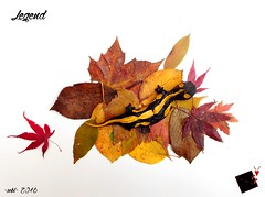 legend (-sebl-) Tags: legend salamander origamisebl mulberry paper forest challenge