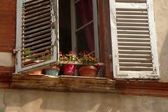 Pots & persiennes (mistigree) Tags: toulouse volet fentre pot plante