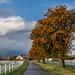 Autumn trees - HFF!