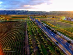 Happy Thanksgiving from all of us to all of you. (John King Photography) Tags: livermore ca wine vineyard vineyards country cabernet sauvignon pinot nior shiraz blanc drone uas phantom 3 professional
