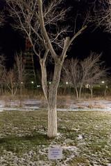 Alexey Leonov (Granmuc) Tags: baikonur cosmonaut alley trees