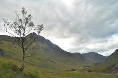 View down Glen Elchaig (hr43) Tags: fallsofglomach sallachy loch long dornie wester ross highland scotland