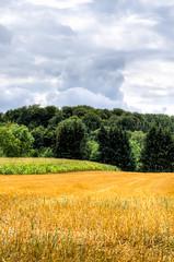 Erntefarben (-BigM-) Tags: germany deutschland photography fotografie feld crops baden hdr ernte fils bigm getreide wrttemberg gppingen stoppel bartenbach brgerhlzle