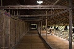 IMG_2454 (Cthonus) Tags: geotagged malaysia borneo longhouse rungus runguslonghouse
