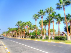 Mersin-2015-1008 (emirerten) Tags: road travel vacation turkey palm mersin avenue palmiye adnan tatil menderes