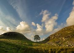 Sycamore Gap (grbush) Tags: sky tree clouds landscape worldheritagesite hills panasonic northumberland g3 hadrianswall lonetree robinhoodprinceofthieves sycamoregap lumixg olympusm918mm