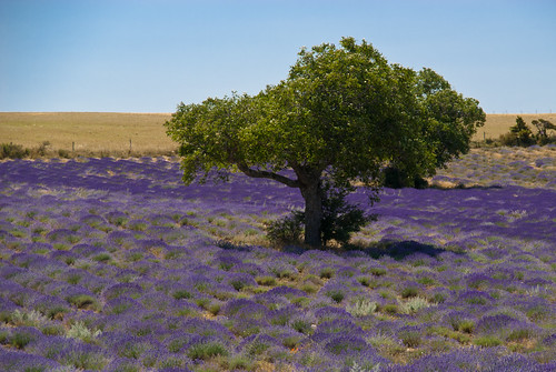 Provence_09_630