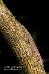 Stick insect (Prisopus sp.) - DSC_7268_uv (nickybay) Tags: macro insect belize uv camouflage animation stick ultraviolet fluorescence phasmatodea bugshot pseudophasmatidae prisopus