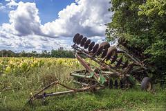 Tobacco Field (John Adkins II) Tags: landscape farm kentucky tobacco oldhamcounty