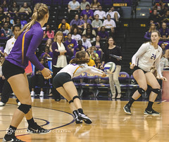 LSU VBall vs. Tenn. (OliviaPaigePhotographyXIX) Tags: alt lsu winner tigers volleyball tennesse sec vols
