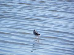 file14263 (Gianluigi Roda / Photographer) Tags: landscapes delta waters waterbirds waterlands