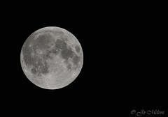 Super Moon (giogio_uk) Tags: sky moon black night eclipse suffolk nikon super tamron lunar lunareclipse lowestoft 600mm d7100 supermoon