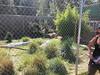 20150919_121812 (mjfmjfmjf) Tags: oregon zoo 2015 greatcatsworldpark