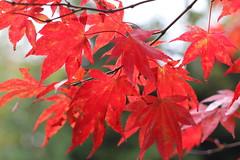 japanse tuin okt 2015 04 (gabrielgs) Tags: autumn colors japanese japanesegarden forrest herfst thenetherlands denhaag bos thehague clingendael japansetuin