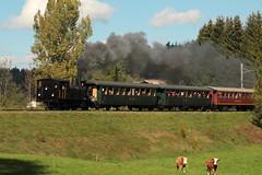Dampflokomotive Ed 3/4 2 der Solothurn - Mnster - Bahn SMB ( Baujahr 1907 - Hersteller SLM Nr. 1799 ) unterwegs bei Huttwil im Oberaargau im Kanton Bern der Schweiz (chrchr_75) Tags: chriguhurnibluemail ch christoph hurni chrchr chrchr75 chrigu chriguhurni oktober 2015 albumzzz201510oktober albumbahnenderschweiz2015712 eisenbahn bahn schweizer bahnen dampflokomotive dampfmaschine dampflok locomotora vapor  vapeur steam vapore  stoomlocomotief albumdampflokomotiveninderschweiz chriguhurnibluemailch albumkheinderschweiz kuh khe cow lehm vache kr mucca  koe ku vaca ko schweiz suisse switzerland svizzera suissa swiss sveitsi sviss  zwitserland sveits szwajcaria sua suiza
