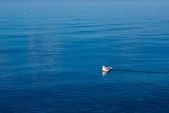 Calm Waters (nikons4me) Tags: michigan mi lakesuperior sonynex7 sonye1855mmf3556oss autumn up upperpeninsula seagulls littlegirlspoint