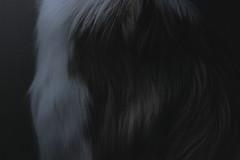 (pedropapini) Tags: dog detail cão canon fur photography rebel mood close laika paulo sao pelo t2i