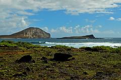 Makapu'u (jcc55883) Tags: ocean sky clouds hawaii nikon oahu shoreline pacificocean makapuu nikond3200 makapuubeach d3200